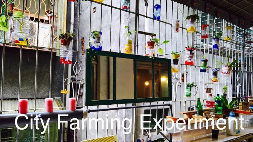 Nanshijiao DeJiu Co-Living Female Dorm-Lower bunkF