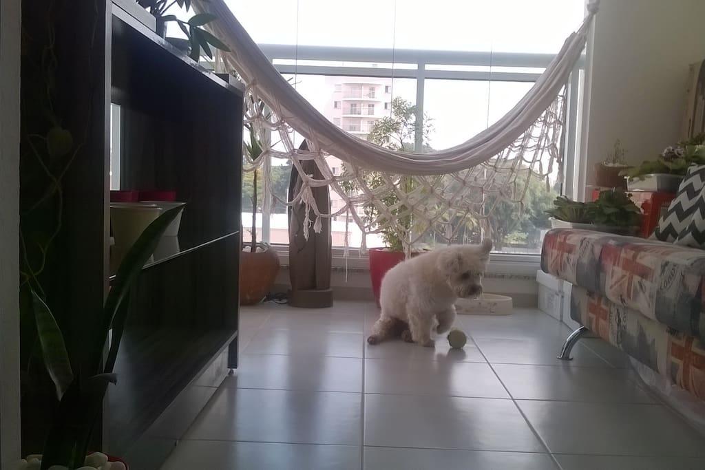 Sacada / Balcony and my dog Reynolds