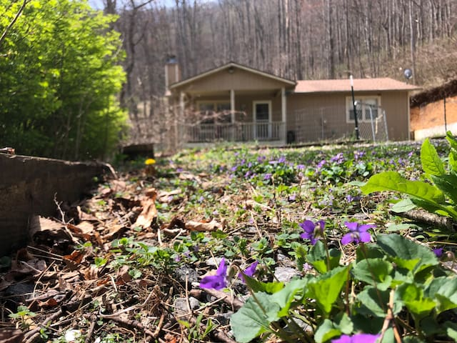 Trout lily Cottage in the Forest