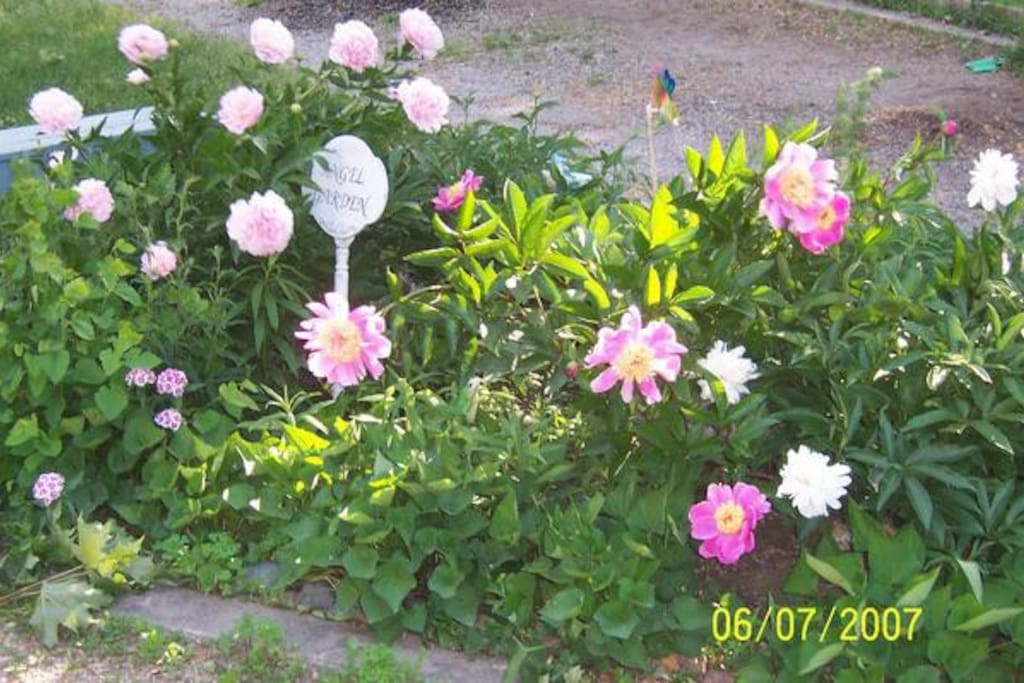 Flower Garden at Sweet Dreams Inn