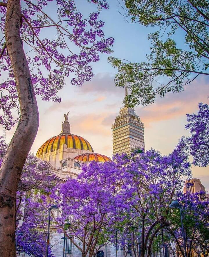 Amazing Loft in historic district Mexico City