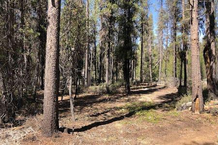 Campsite #1 at Mt Scott Meadows