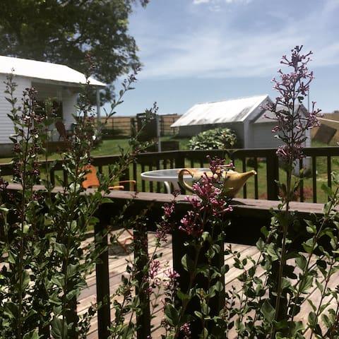 Summer Lilac bush