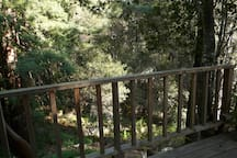 Looking down from the deck toward the winter creek.
