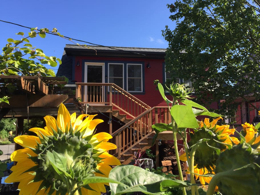 View from the south - neighbors sunflower forest is in full bloom!