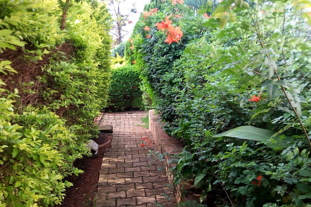 Walkways through our garden