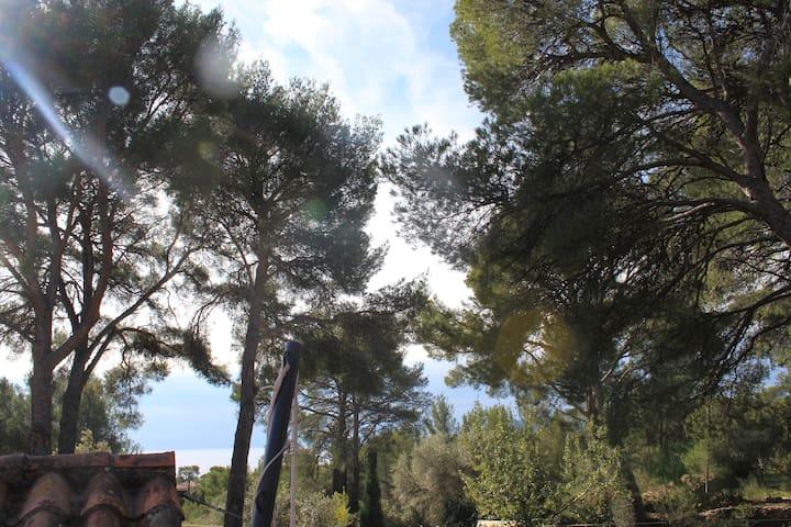 Une  chambre dans les pins