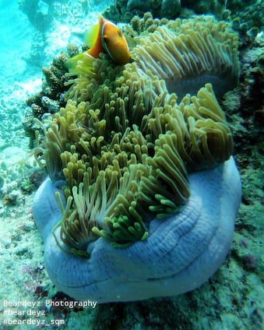 Discover Scuba Diving In Maldives