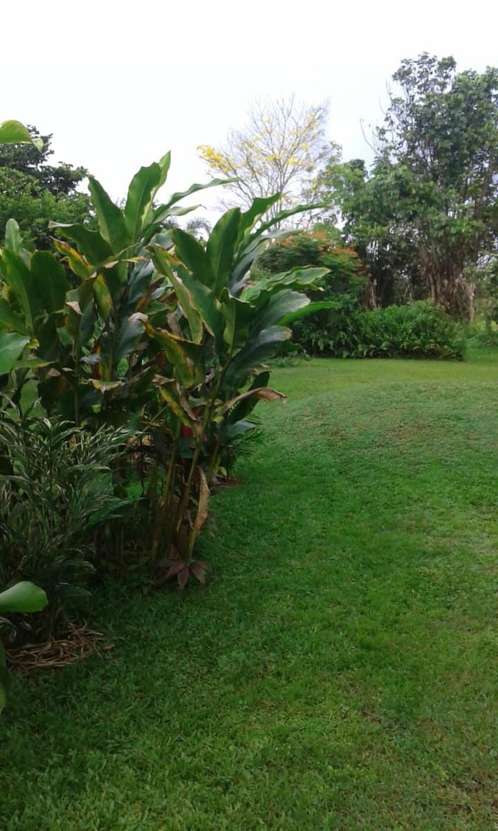 Shulamite Garden