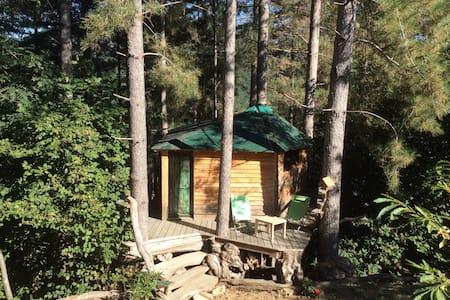 cabane dans les pins - Beaumont - Ağaç Ev