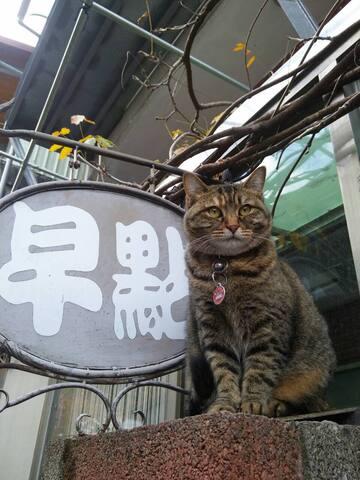 寶貝家貓『菠蘿』