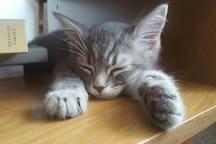 Biggie the kitten