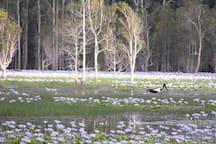 Explore Cattai Wetlands