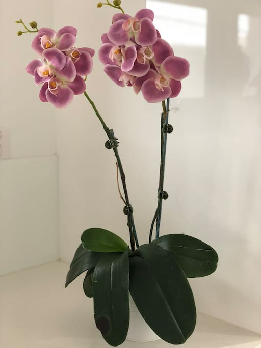 Beautiful living orchids