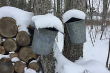 Visit during February or March for a first-hand look at maple sugaring