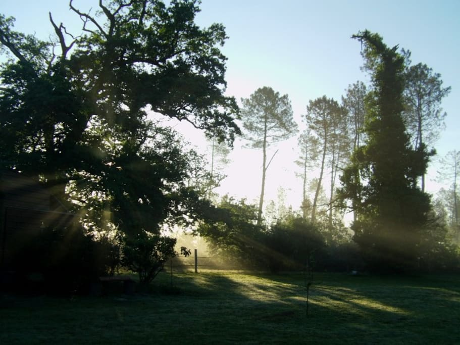 Le jardin au petit matin