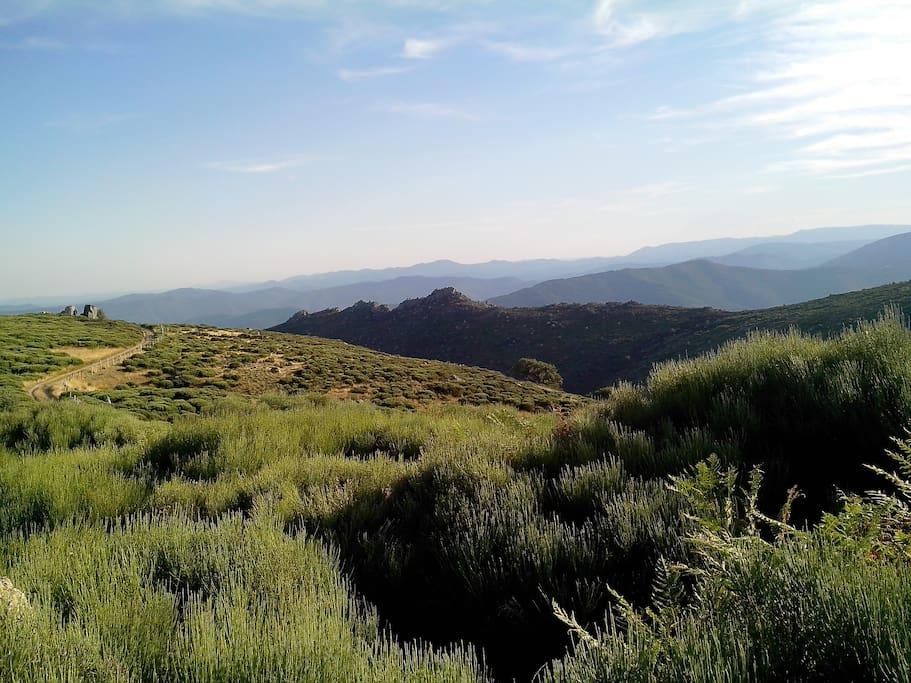 Chemin des Bouzede sur le Mont Lozere