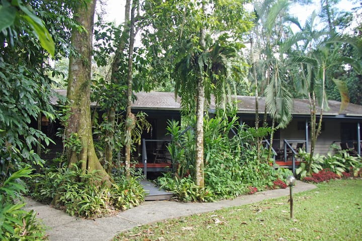 Rainforest Cabin in the Daintree Rainforest