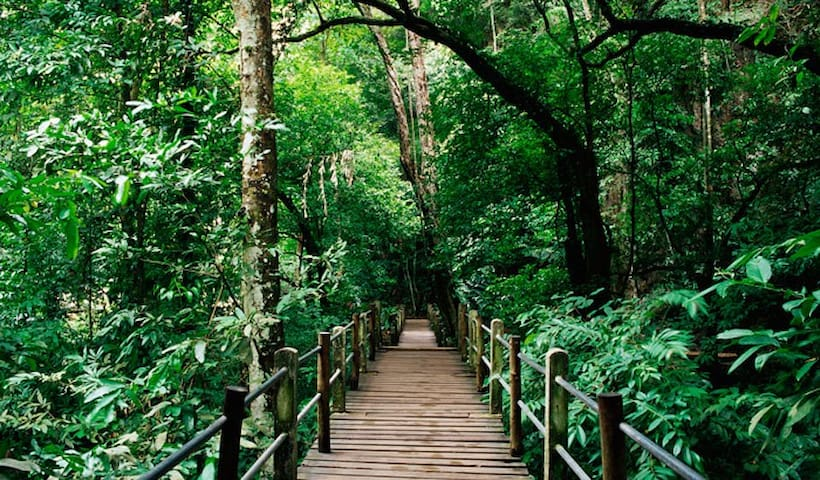 KL Forest Eco-Park - just a short walk of 15 mins from the apartment