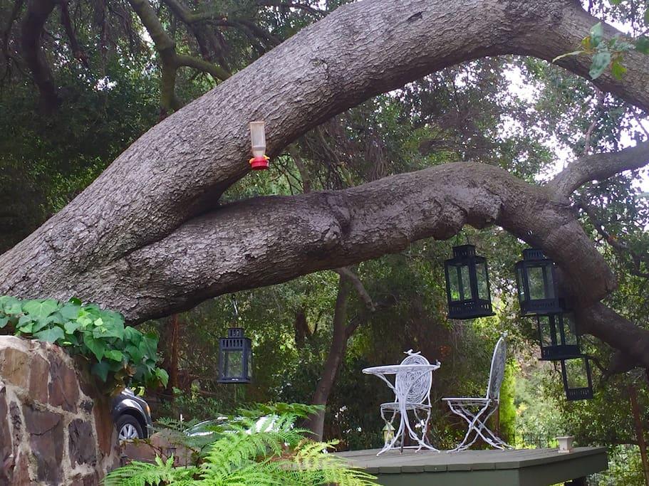 * Deck under the Oak Trees