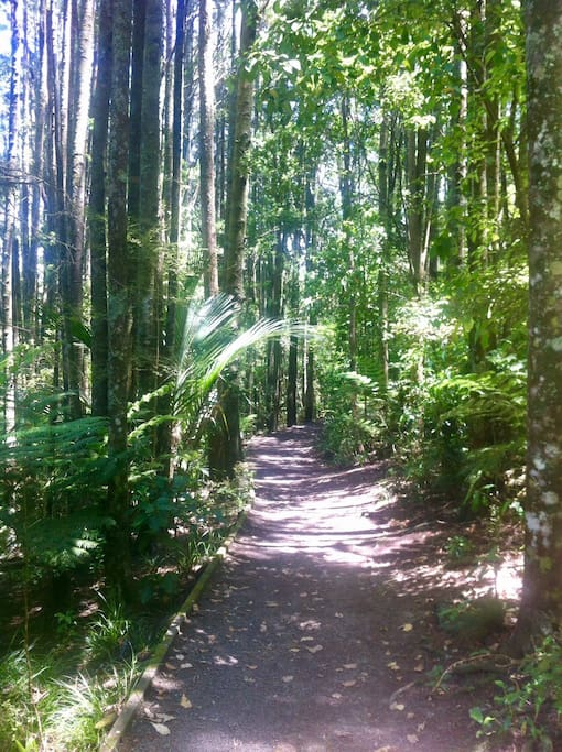 Eskdale reserve a tranquil typical NZ green forest for walking /running/ mountain biking one minute walk from home