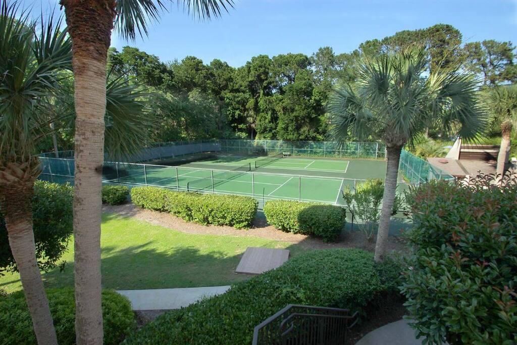 Fence,Hedge,Palm Tree,Tree,Yard