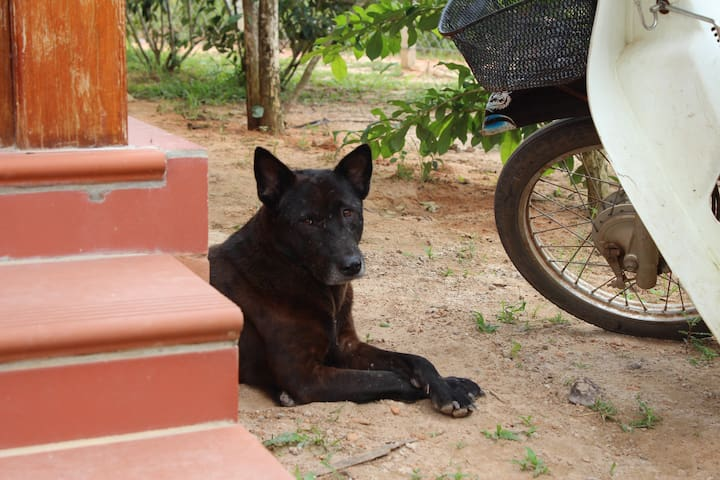 "A member of our family. He named Mực (means ""Black"" in English). A good security guard at night."