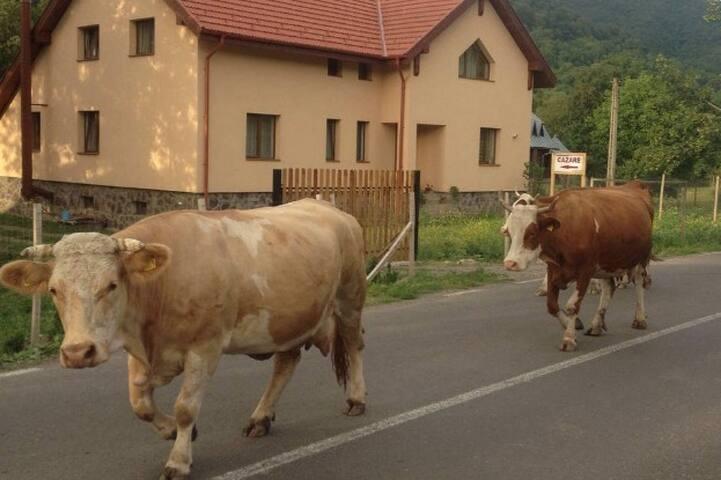 My villa in Transylvania - Brădeţelu - Villa