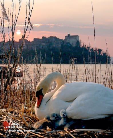 """ LUNA "" Confortevole romantico - Anguillara Sabazia - Apartment"
