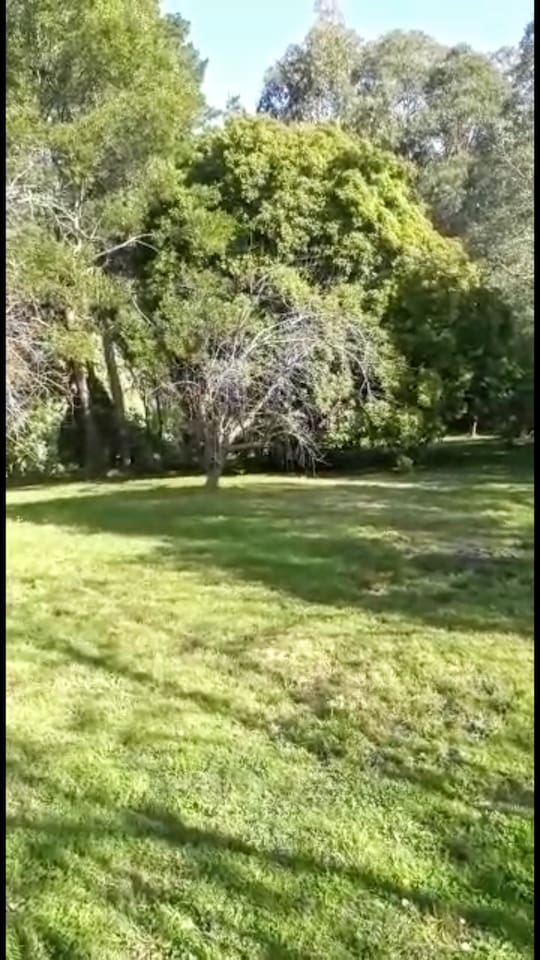 large grassy areas to have a picnic in the garden