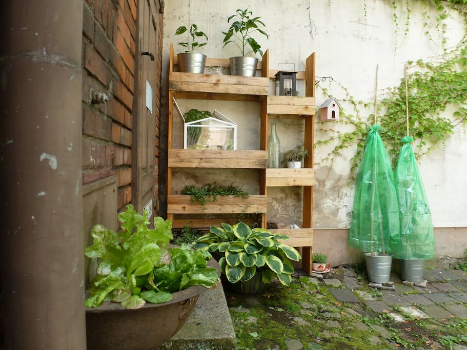 little garden corner with fresh vegetables and herbs