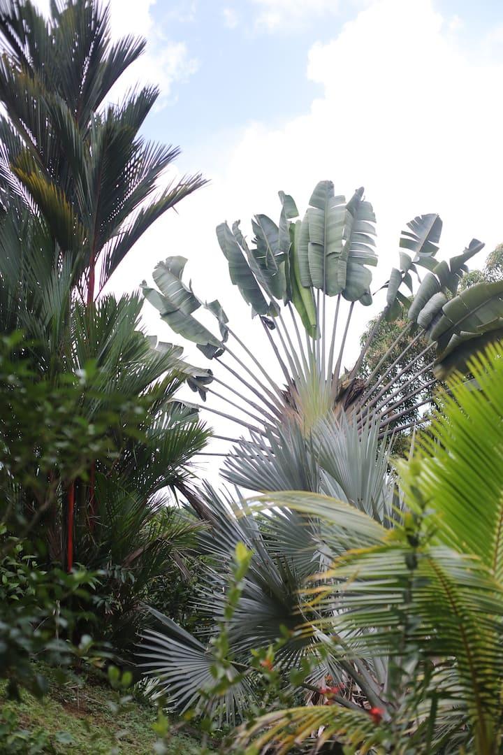 Duplex  aux coeurs des palmiers