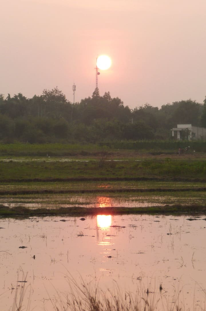 Sunset on the rice field