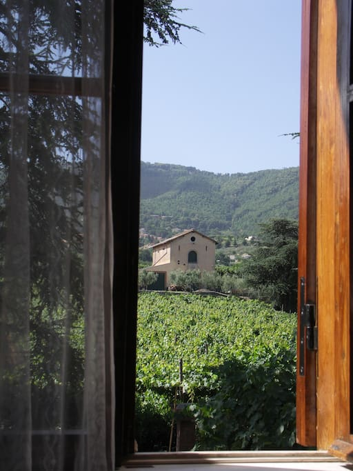 View of the vineyard from bedroom