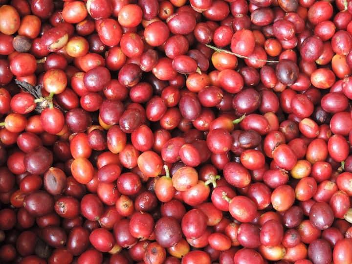 Aquiares Coffee