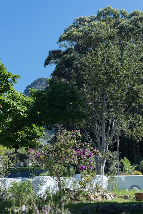The Garden Room is situated opposite a forest and has a clear view of Table Mountain
