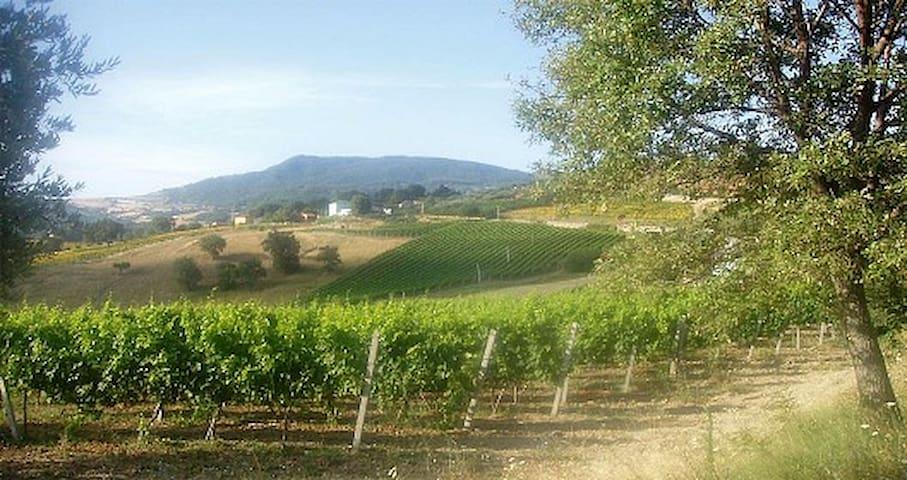 Bellissima casa con vista collina - Acquaviva Collecroce