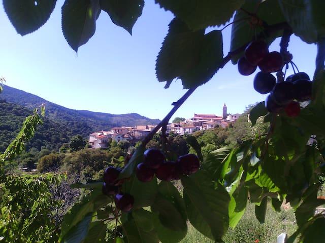 La Nohemienne, dalla montagna al fiume - Gadoni - Daire