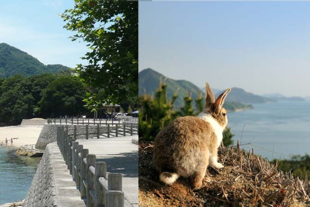 """It is a 40-minute train ride to the ferry terminal for Okunojima famous for """"the rabbit island""""."""
