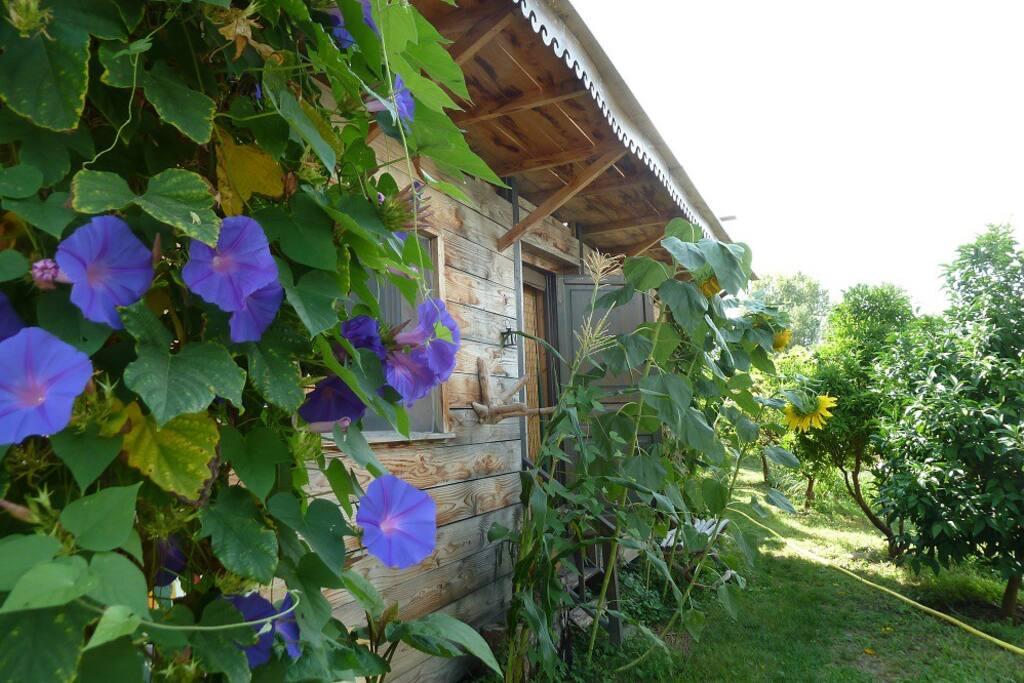 La cabane du potager agriculture bio chambres d for Chambre d agriculture hautes alpes