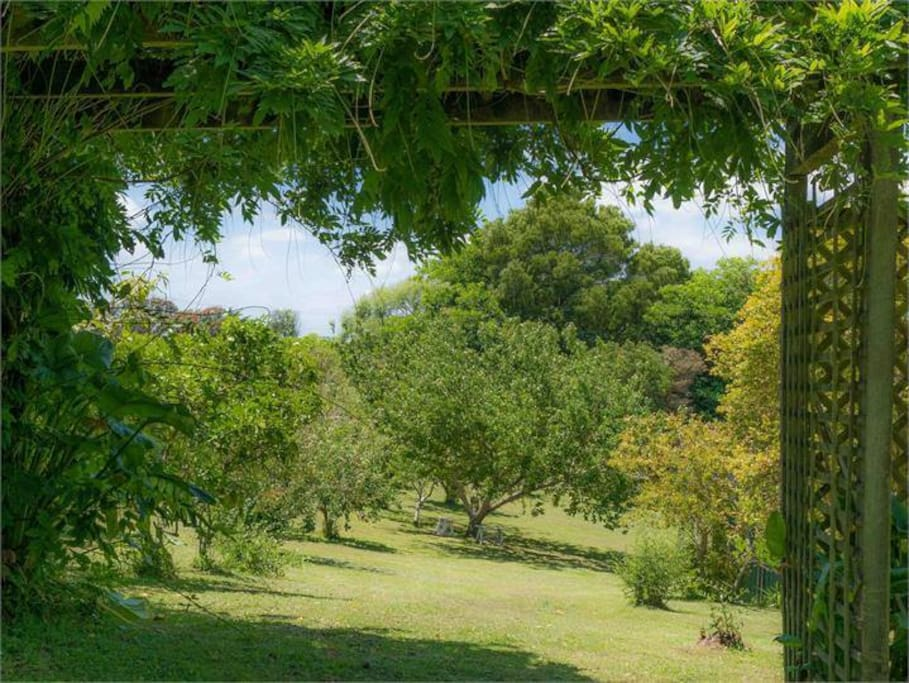 Explore the orchard and garden.