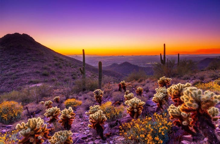 Cozy Desert Oasis - Scottsdale - Apartment