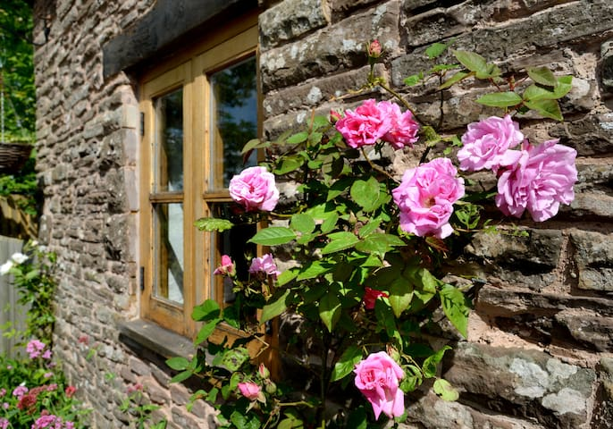 Roses by the door
