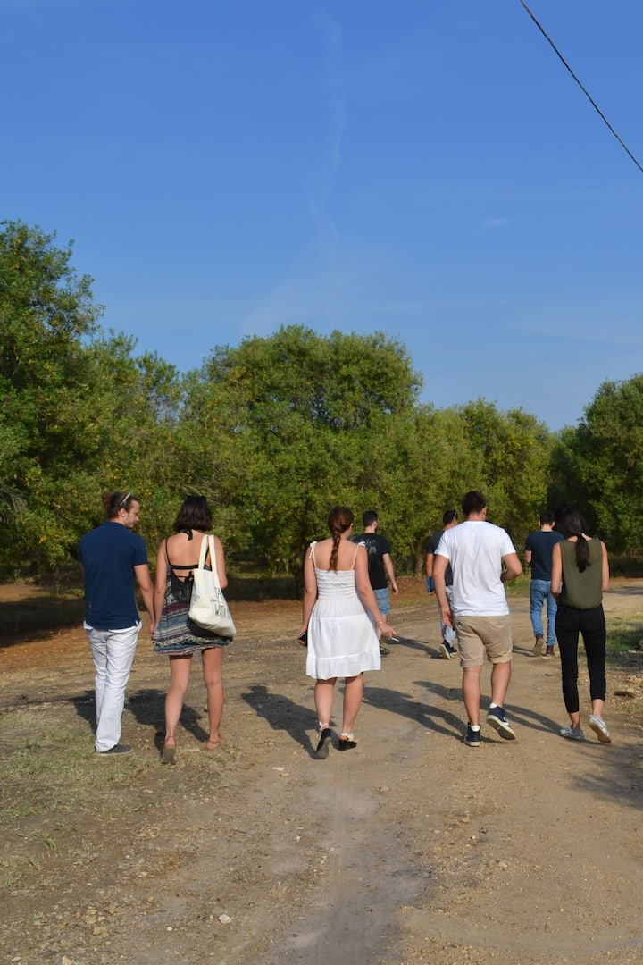 Let's have a walk in the olive grove