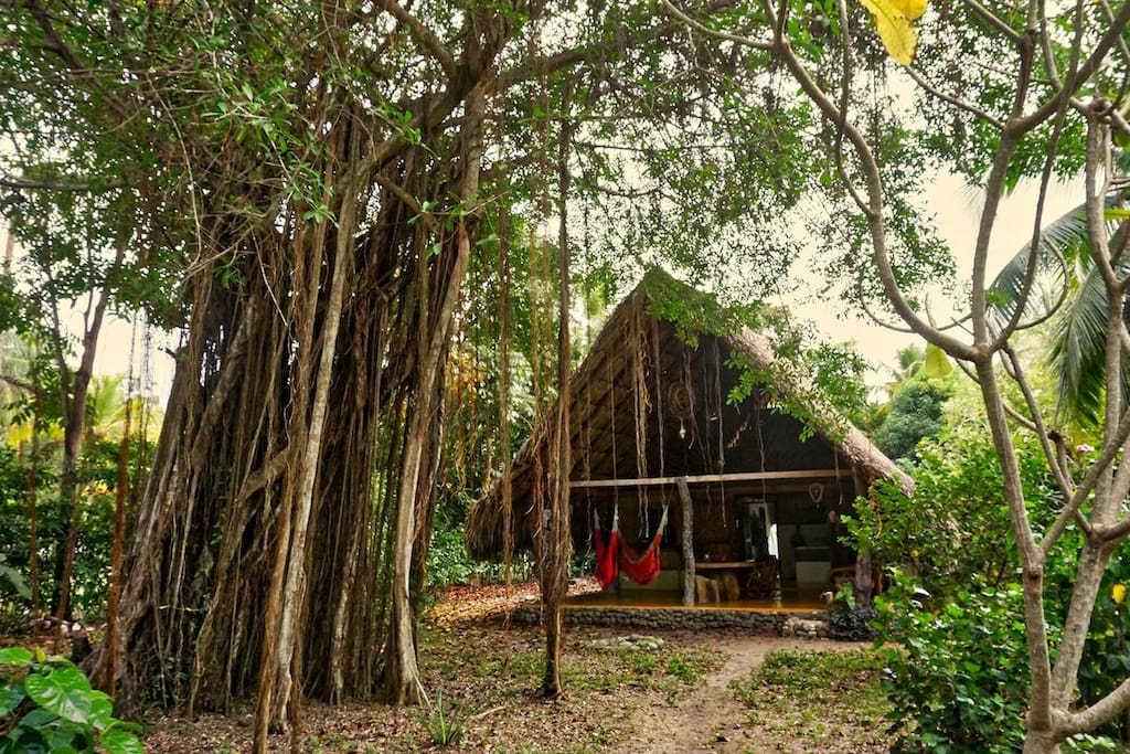 Our loved beach home by a rubber tree