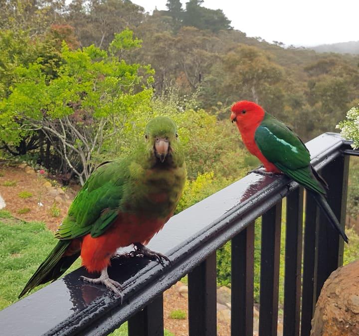 King parrots visit