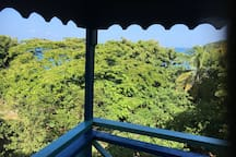 View to the tops of the trees and the sea