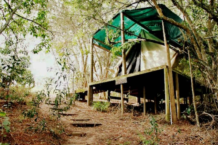 Firefly forest glamping Tent