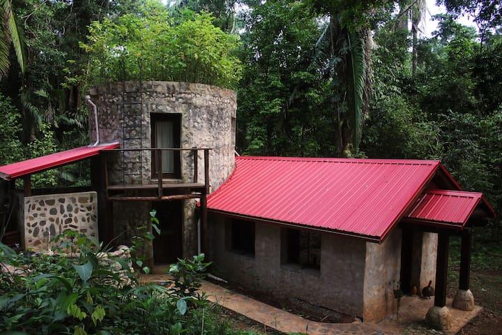 A Castle in the Jungle