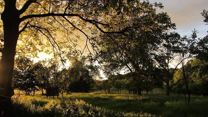 Wilderness Experience @ Sagittarius A* Retreat